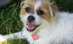 Your One-Stop Online Discount Pet Supplies Store! Whether you have a dog or cat, any kind of pet, One Classy Canine Pet Supplies has the products you need to keep your dog or pet safe, healthy and happy. Our online pet supplies store is constantly updated