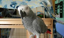 Simba is a 3-4 year old gray, talks like crazy very tame and friendly. simba comes with a large cage and toys. he is a great pet i have to let him go do to health problems. call for more info Dave.5616864246 may deliver to the right person.