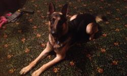 Duke has finished several training classes, has had hip x-rays, and would make a fantastic search and rescue dog, or ?