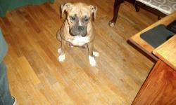 have a female AKC boxer that needs a new home. She is 2 years old she has had one litter very healthy pups she will be going in heat in April I need to find her a good home so if you are intrested please call me 561/6883080 I don't check my e-mail that