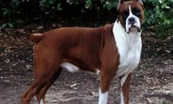 Champion & Euro Bloodlines We are currently taking reservations on Harlow & Retro's litter due April 25th 2011 Please visit AutumnSpringsBoxers.com for more information Contact us at IWantThatPuppy@AutumnSpringsBoxers.com