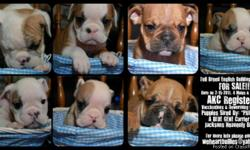 Just in time for Easter! We have 7 gorgeous English Bulldog puppies ready for a new home. We have 4 males and 3 females. All puppies are AKC registered. Vaccinations and deworming are all up to date. Price ranges from $1800-$2500 depending on markings,