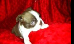 She is bred to be red not just one out of a litter. She comes with her first shot and worming done on a schedule.Dew claws removed and has a natural screwtail. Her mom is dark red and her dad is a bright red.Shehad a full collar and