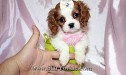 Congratulations ? you have found the best place in the country to get your new teacup puppy. The Star Yorkie Kennel brings you the best selection of teacup puppies and assures you will be happy with your new baby. The puppies we carry will range in