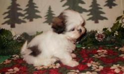 AKC Shih Tzu female born 9-25-10. She will stay small 8-10 pounds. She has her dewclaws done, wormed at 2, 4, 6, and 8 weeks. she has her vet health check and her first puppy shots. She comes with a goodie bag stuffed with dish, food, toys, brush, chews,