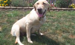 AKC Yellow Female Labrador Retriever Dog born on April 19, 2010. She is 15 months old. She is a very affectionate, playful and loving girl. She would be good in a home with one ?on- one love and attention. Ireland is spayed, micro chipped and registered