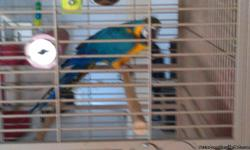 I am selling 5 birds. A Blue and Gold Macaw, a pair of SI Eclectus and 2 Indian Ringnecks. If you are interested please email me.
