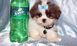 Visit our website www.StarYorkie.com now to see pictures and info for all available puppies. All of our puppies are registered, small, cute, healthy, and playful and come with health guaranty, free vet check and a complete puppy package. Thank you