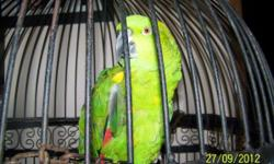 10 year old Amazonian Yellow Nape Parrot for sale to good home. Sunny is a good bird but was left at our house by a previous room mate and we lack the knowledge or funds to properly care for him. Comes with very nice cage, toys and some food. Beak does