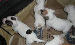 PUREBREAD AMERICAN BULLDOG PUPPIES FOR SALE. MALE AND FEMALE AVALIABLE. 6 WKS OLD AND LOOKING FOR NEW HOMES. CALL 524-0475 ONLY THREE LEFT.