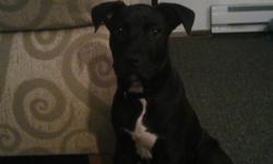 hes 15 weeks old. he is a zebo blue 100% american pit bull terrie. hes very energetic,plays well wit kids. only reason for selling him is cause da land lord wont let him stay. he is a beautiful dog. im askin for 200 but will take nothing less den 125. i