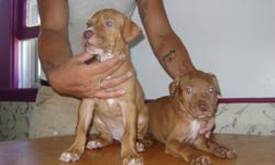 We have 2 females and 1 male left. Not very firm on the price...make an offer They were born on June 27th Ready to go Very cute Parents are on site If interested please call 616-205-6924