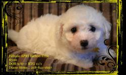 "Stone Kennels is  a small family run ""Hobby Kennel"".. We believe in ""Quality NOT Quantity"" We have 1 Female Bichon Frise that is ready to go NOW!!!! APRI registration And we are expecting 3 more litters at the end of November/December Taking names"