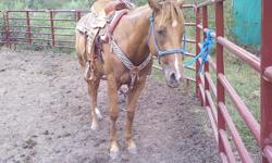 Here is a 3 yr. old Dash For Cash and Easy Jet granddaughter.She's a very pretty sorrel. This little AQHA filly is bred for speed if your looking for a barrel horse she's gonna be great! She's such a joy to ride. She has had 6 months cutting training and