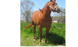 Several AQHA reg horses for sale. Broodmares, yearlings, and two year olds. Any reasonable offers considered.