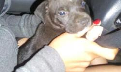 I HAVE 2 BABY PITBULLS FOR SALE ASKING FOR $100 OR BEST OFFER. THEY ARE BLACK AND WHITE, ONE MONTH OLD FEMALE AND MALE. I ALSO HAVE A BLUE FAWN WHITE AND LIGHT BROWN THATS 5 MONTHS OLD $250. CALL FOR MORE INFO (323)392-9004. NICE PITS MUST SEE!