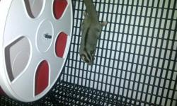 I have a male baby sugar glider that needs a good home. I just don't have the time to give him the attention he needs. He is so cute and comes with everything (cage, running wheel, food bowl, water bottle, heat rock, bonding pouch, CD, toys, 2 year supply