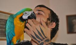 This is a very loving and sweet macaw. She loves to talk and dance. Does very well around dogs. I am including a large perch, videos and books on how to train macaws, I might also be able to throw in a large cage, if the person who gave it to me doesn't