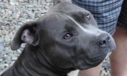 I rescued this dg from running the streets.I have taken him to the vet so I know he is healthy has his shots etc. I have more than $100.00 in to this dog I am asaking for $75.00 to help with my costs. He is aprox. 10- 12 months of age. Blue with white