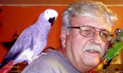 """Large, talkative African Grey who also whistles """"Bridge over the River Kwai"""", """"Dixie"""", and """"Happy Birthday"""" with a real vibrato whistle. Very sweet, and engages in conversations with his owner. He is about 7 yrs. old, and has a friend who must go with"""