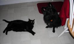We are forced to move due to foreclosure. We have a beautiful, very healthy and happy black with a touch of white on chest, female, spayed and front paws declawed, vet-cared for, all shots, in house only cat, named Spooky (born on Halloween!) that we are