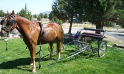 I have a black metal full size horse cart with harness for sale. Seat is black and red leather and cart is black metal with large bicycle type tires. Very light, can haul in my short bed pickup and a lot of fun. Email blackdog@cbbmail.com for pictures.