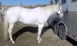 15 year old 16 hand gray tobiano gelding. Beautiful and fast. He was raced before I got him and roped on. He has been hauled to rodeos. He would make a great grand entry/flag horse, pickup horse or hazing horse. Very cowy. He is a 2D/3D barrel horse, and