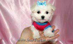 Visit our website www.StarYorkie.com now to see pictures and info for all available puppies, or give us a call to find out about Puppies that are soon to be available... All of our puppies are registered, small, cute, healthy, and playful and