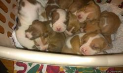 Beautiful and healthy pups ready for loving families. Call or text .