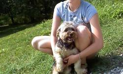 Our next Professional Dog Trainers Course is in Sept 2011 Visit us at www.getyourdogtrained.com 1-800-933-6489 973-875-5016 Financing available for Tuition Certification given at end of program Northern New Jersey