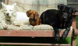BED & BISCUIT: Where Dogs Run Free! CHARMING COTTAGE WITH LARGE FENCED YARD ROUND THE CLOCK LOVE AND ATTENTION! THE UN-KENNEL PET CARE! Cozy slumber parties on beds and quilts. Limited clientele. Specializing in cageless country boarding for city and fun