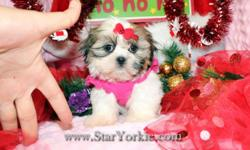 Tiny Teacup & Toy Yorkie, Pomeranian, Maltese, Havanese, Maltipoo, Morkie, Shih-Tzu, Cavalier and more...  Visit our website www.StarYorkie.com now to see pictures and info for all available puppies. All of our puppies are registered,