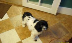 Free to a good home Black and White Cocker Spanel, Female has been spaed and all shots, about 5 years old, Good with kids she is very smart and house broke. Call ()- ask for Ronnie