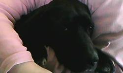 Please bring me home. My name is Shadow I am a black lab/beagle mix who is very loving. I need a new home my previous owners were going to send me to the pound, but a couple rescued me, temporarily (we already have enough dogs on the property). I need