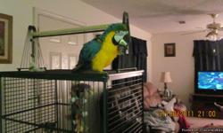 IM LISTING MY BIRD DO TO IM MOVING HE /SHE IS A VERY PRETTY BIRD WE HAD NAMED HIM CHIPPER ,HE IS TWO YEARS OLD AS OF AUGUST.HOPING THAT SOMEONE IS LOOKING TO GIVE HIM A VERY HAPPY HOME.im only listing this locally he does not ship out .he talks some says