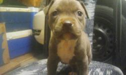 8 weeks old little girl first sets of shots and deworm call or text for more info