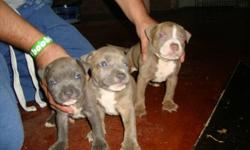 I have 7 pitbulls 3/F 4/M that are UKC PR registered, 75% razor edge 25% gotti for more info 423 266-6144 ask for omar im asking a rehoming fee, they are 6 wks old, they have had they're 1st shots and have been dewormed