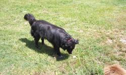 Three year old black Border Collie free to a good home. I have three other dogs and need to part with her. She is a very loving dog and is very good with kids. As of 8/5/2011, Lady is still available. She is housebroken and loves to play outside with