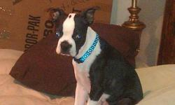 5 month old female. Asking a rehoming fee.