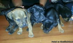 One pup is brindle blk.. 3 rottweiler.. And one is blk with a white lil stripe on its forehead and white on its neck