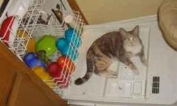 We are looking for a permanent home for Chanel. She was rescued by our family as a kitten, is healthy, spayed, and very low maintenance. Chanel is an indoor-outdoor cat who enjoys climbing trees but also likes to come inside to rest from her exhausting