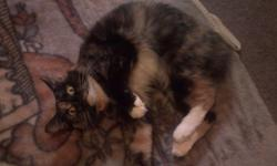 I am a 5yr old calico bobtail cat (yes I was born this way). I am a very lovable cat. I am strictly an indoor cat, and despise the outdoors. I am completely declawed and spayed. I am looking for a loving home preferably with kids who will love me. I come