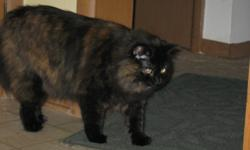 2 female cats 4 years old spayed, front claws removed, shots up to date. free to loving home