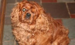 Male fully trained people friendly 3 years old