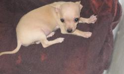 She is 3 months old and is up to date on shots and wormings. She is very out going and playful. Call me at 561-688-3510