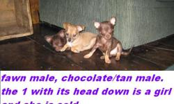 I have 2 VERY playful little boys that are 8 wks old today{5-20-11} first shots/ and have finished with their worming schedual..we went for the vet check today and they are healthy and ready..and have health certificates. i am not a kennel, they are