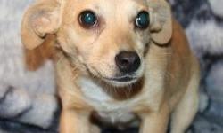 I have2 chihuahua mixes up for adoption. The first isfemale named Carrie. She is 18 months old andready for a home to call her very own. she loves chew treats and going for walks with her human! she gets along