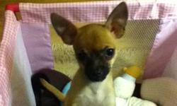 I have chihuahua puppies 4 sale . I have four puppys for sell. I sell them with no shots an no papers. They are 8 weeks old born on august 4,2012 ready to go oct.4 2012..