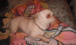 male one year old ,not fixed , great with kids and other dogs,