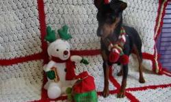 It`s that time of year again when we all wonder what type of gift`s our loved ones would like to have. This sat. Dec. 8th Canine Safe Harbor will hold it`s Christmas Dog Adoption Event from 2-4 p.m. We are located at 8171 W KL Ave. just 1 1/4 mi. west of
